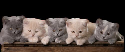 Résultat d'images pour Gifs barre de séparation chats