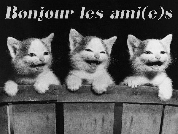Bonjour De L Humour Et Blague Bon Mardi Biz