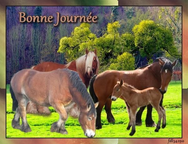 Bonjour, bonsoir..... - Page 2 5c294222