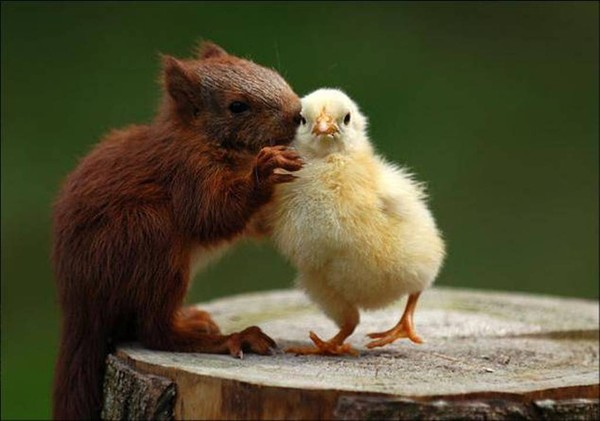 image animaux tendresse
