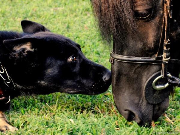 Site de rencontre pour chien alsace