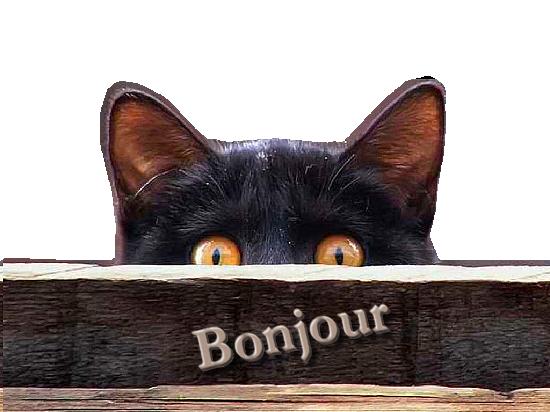 Amour de chats - bonjour -