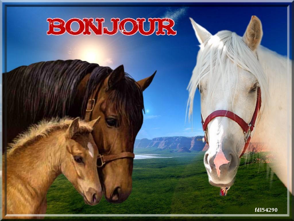 image cheval bonjour