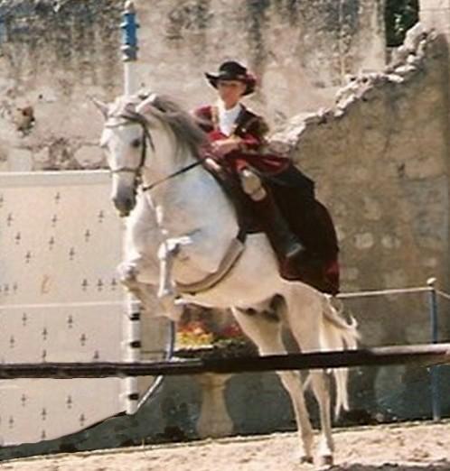 Chevaux et amazones - Frison saut d obstacle ...